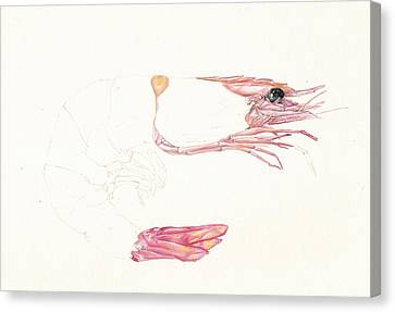 Half A Prawn Canvas Print by Richard Mountford