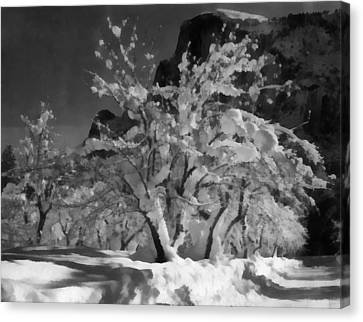 Half Dome Apple Orchard Canvas Print by Ansel Adams