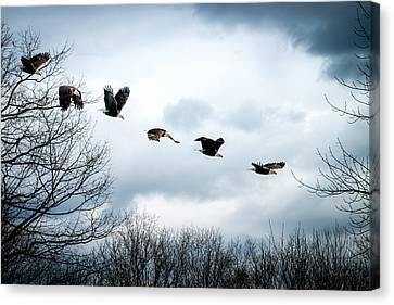 Half Second Of Flight Canvas Print by Bob Orsillo