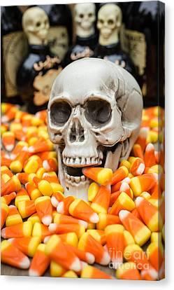 Halloween Candy Corn Canvas Print by Edward Fielding