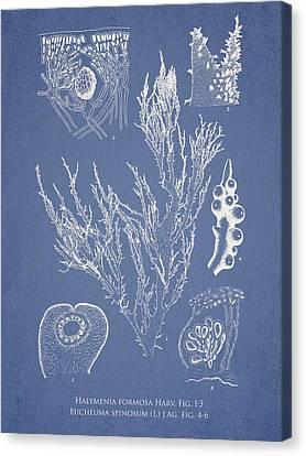 Halymenia Formosa And Eucheuma Spinosum Canvas Print by Aged Pixel