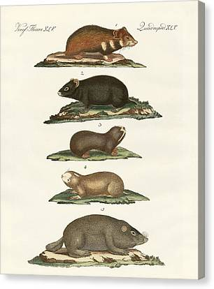 Hamsters And Field Voles Canvas Print by Splendid Art Prints