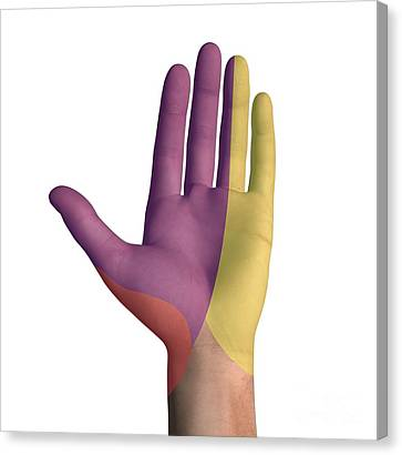Hand Palmar Nerve Regions, Artwork Canvas Print by D & L Graphics