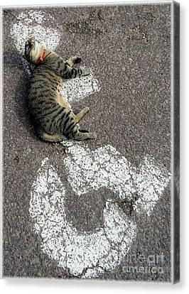 Handicat Parking Canvas Print by Barbie Corbett-Newmin