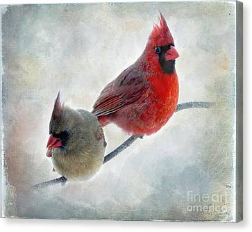Handsome Couple IIi Canvas Print by Debbie Portwood