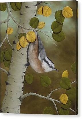 Hanging Around-red Breasted Nuthatch Canvas Print by Rick Bainbridge
