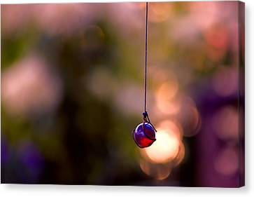 Hanging By A Thread Canvas Print by Bonnie Bruno