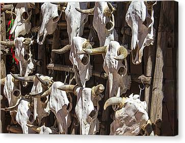 Hanging Cow Skulls Canvas Print by Garry Gay