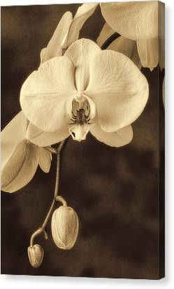 Hanging Orchid Canvas Print by Garry Gay