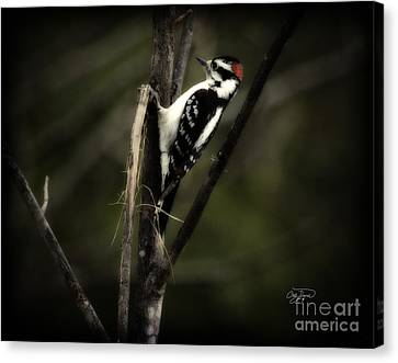 Hanging Out Canvas Print by Cris Hayes