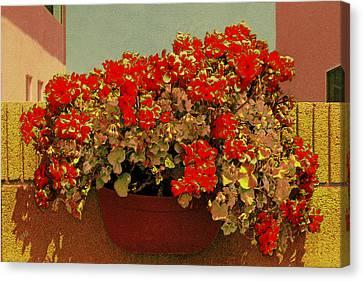 Hanging Pot With Geranium Canvas Print by Ben and Raisa Gertsberg