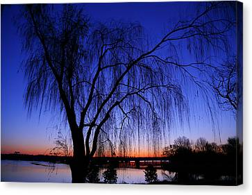 Hanging Tree Sunrise Canvas Print by Metro DC Photography