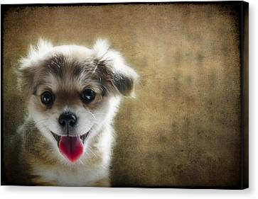 Happiness Is A Little Puppy Canvas Print by Lisa Knechtel