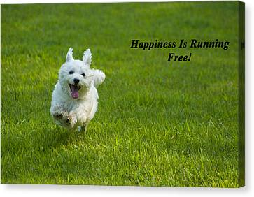 Happiness Is Running Free Canvas Print by Pat Exum