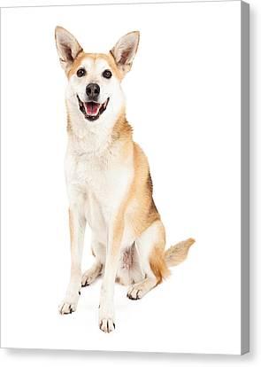 Happy Australian Cattle Dog And Shiba Inu Mix Canvas Print by Susan  Schmitz