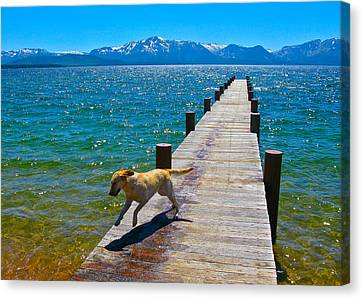 Happy Dog Canvas Print by Michael Blesius