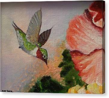 Happy Hummer Canvas Print by Janis  Tafoya