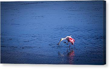 Happy Spoonbill Canvas Print by Marvin Spates