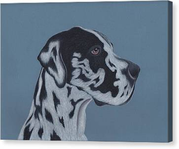 Harlequin Great Dane Canvas Print by Sesh Artwork