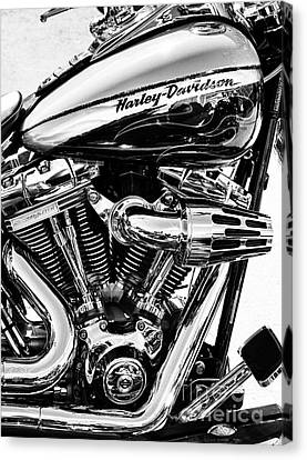 Harley Monochrome Canvas Print by Tim Gainey
