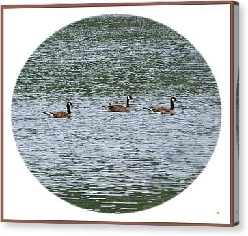 Harmonious Canada Geese Canvas Print by Will Borden
