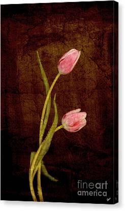 Harmony  Canvas Print by Alana Ranney