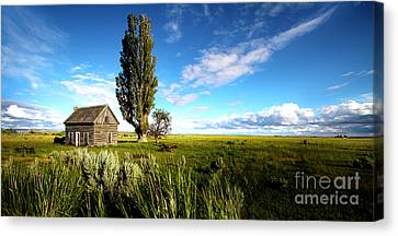 Harney County Homestead Canvas Print by Michele AnneLouise Cohen
