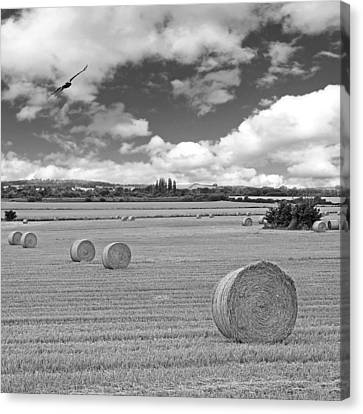 Harvest Fly Past Black And White Square Canvas Print by Gill Billington