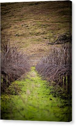 Harvested Vines Canvas Print by Mike Lee