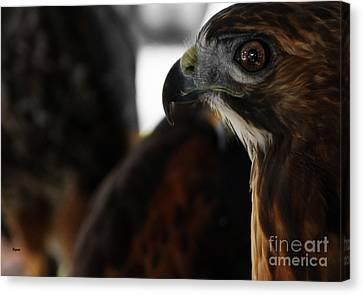 Hawk Eye Canvas Print by Steven  Digman