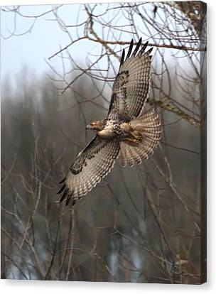 Hawk In Flight Canvas Print by Angie Vogel