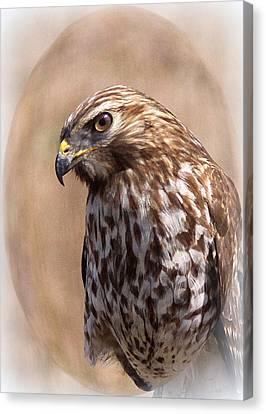 Hawk - Sphere - Bird Canvas Print by Travis Truelove