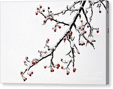 Hawthorn Ice And Snow - D004830 Canvas Print by Daniel Dempster