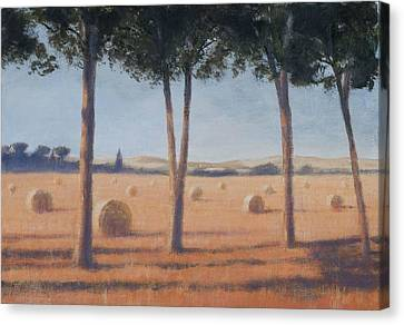 Hay Bales And Pines, Pienza, 2012 Acrylic On Canvas Canvas Print by Lincoln Seligman