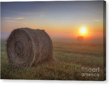 Hay Bales On A Foggy Alberta Morning Canvas Print by Dan Jurak