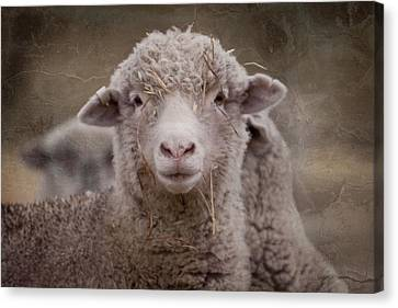 Hay Ewe Canvas Print by Michelle Wrighton