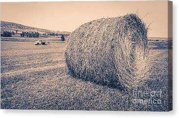 Haying The Field Canvas Print by Edward Fielding