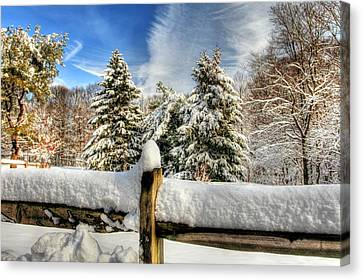 Hdr Of Three Trees Canvas Print by Geraldine Scull