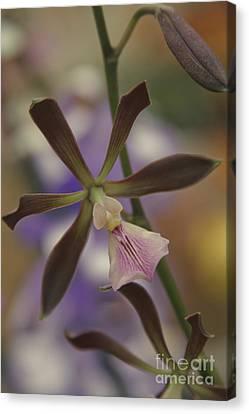 He Pua Ke Aloha - The Flower Of Love - Orchidea Tropicale Canvas Print by Sharon Mau