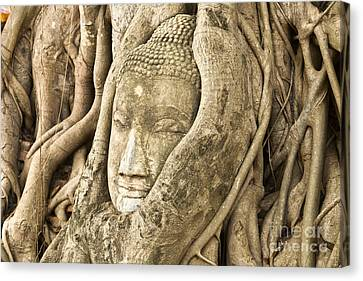 Head Of Buddha Ayutthaya Thailand Canvas Print by Colin and Linda McKie