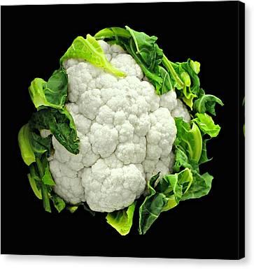 Head Of Cauliflower Canvas Print by Diana Angstadt