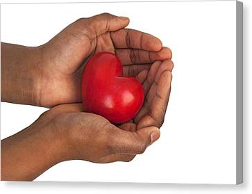 Heart In Hands Canvas Print by Chevy Fleet