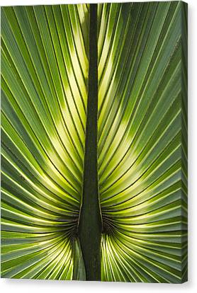 Heart Of Palm Canvas Print by Roger Leege