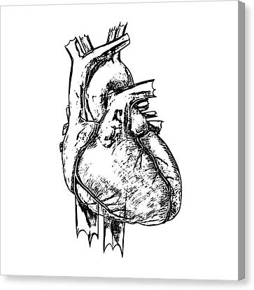 Heart Canvas Print by Russell Kightley