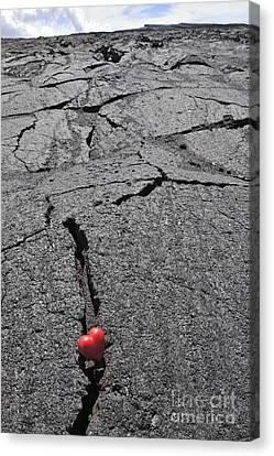 Heartshape In Crack Of Cooled Pahoehoe Lava Canvas Print by Sami Sarkis