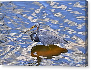 Heavenly Heron Canvas Print by Al Powell Photography USA