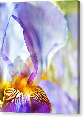 Heavenly Iris Canvas Print by Theresa Tahara