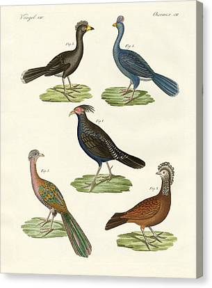Hen-like Birds Of Hot Countries Canvas Print by Splendid Art Prints