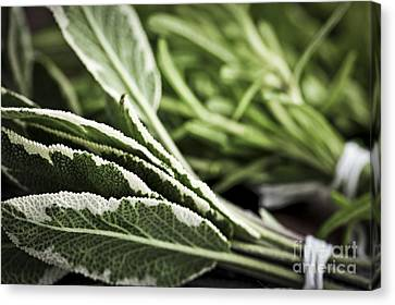 Herbs Canvas Print by Elena Elisseeva