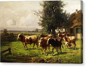 Herd Of Cows Canvas Print by Adolf bei Dachau